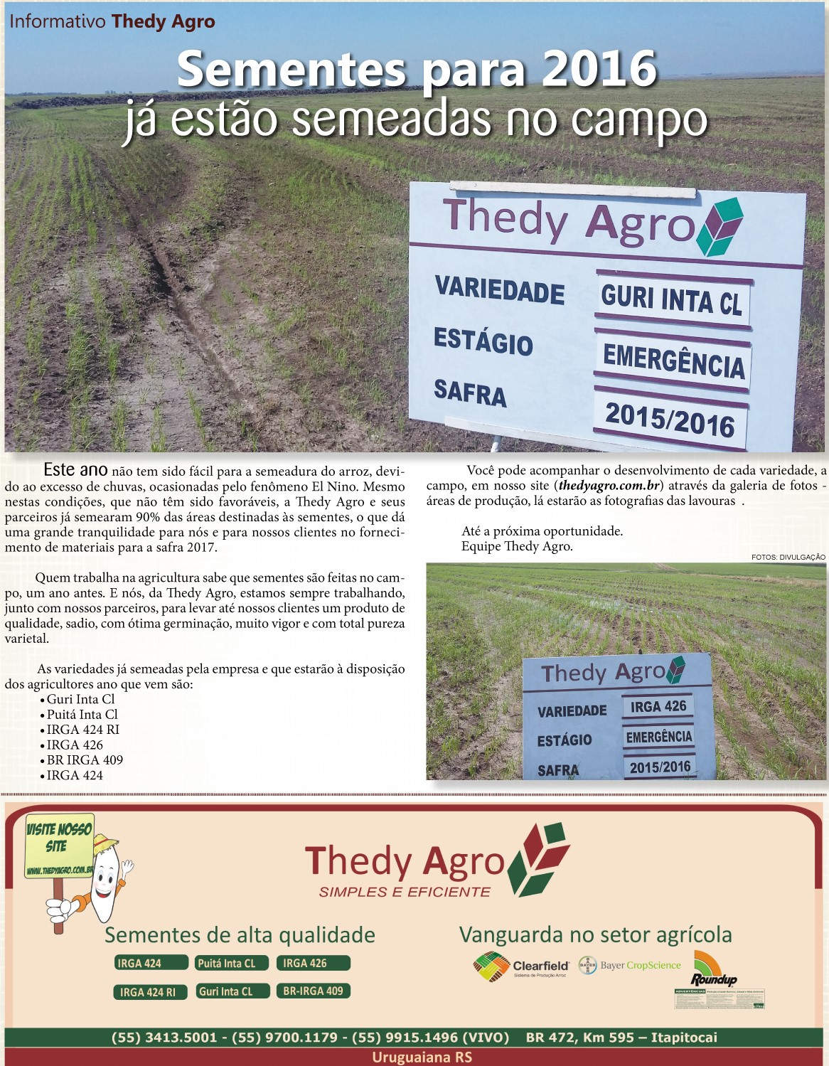 Sementes para 2016 já estão semeadas no campo