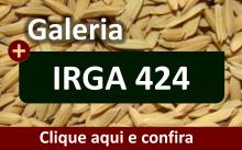 Galeria da variedade IRGA 424