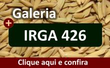 Galeria da variedade IRGA 426
