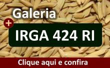 Galeria da variedade IRGA 424 RI